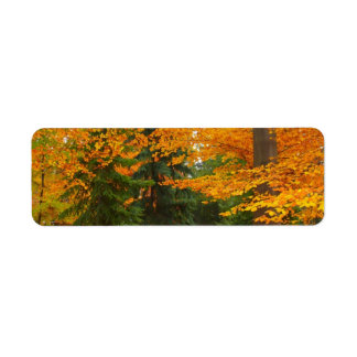 Evergreen Pines and Autumn Trees Label