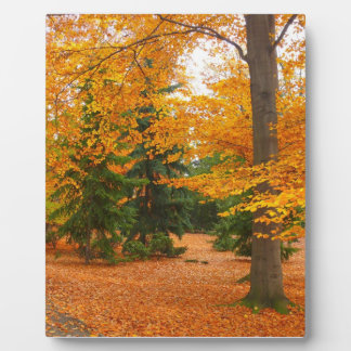 Evergreen Pines and Autumn Trees Plaque