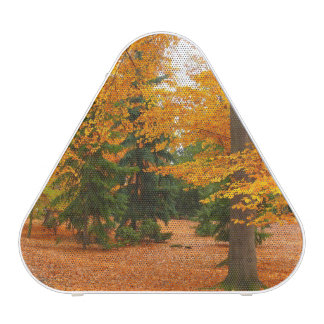Evergreen Pines and Autumn Trees Speaker