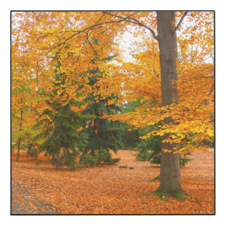Evergreen Pines and Autumn Trees Wood Wall Art