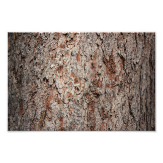 Evergreen tree trunk photographic print