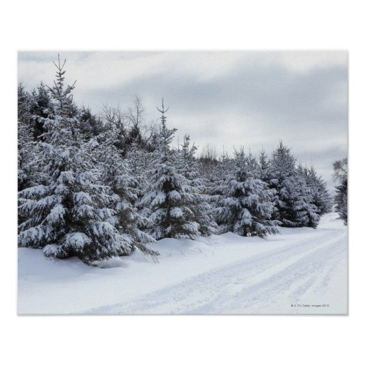 Evergreen trees and road in snow poster