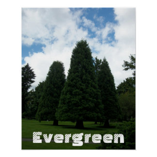 Evergreen Trees Inspirational Poster