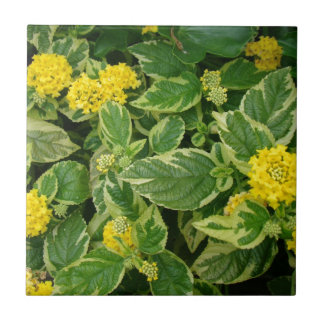 Evergreen with yellow ceramic tile