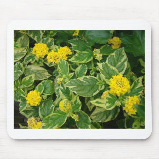 Evergreen with yellow mousepads