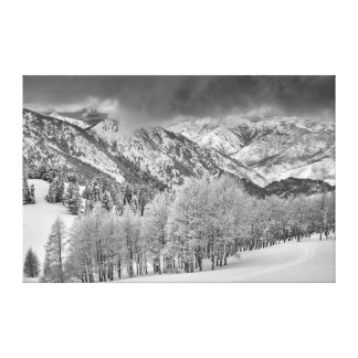 Evergreens and Aspen trees in a snow storm Canvas Print