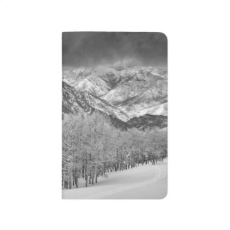 Evergreens and Aspen trees in a snow storm Journal