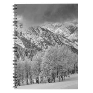 Evergreens and Aspen trees in a snow storm Notebook