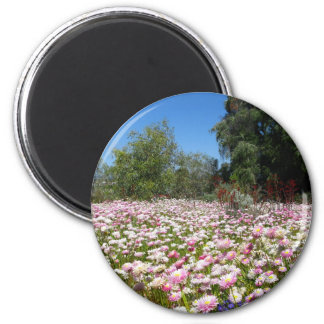 Everlasting Flowers Magnet