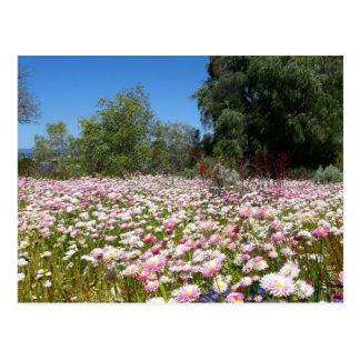 Everlasting Flowers Postcard