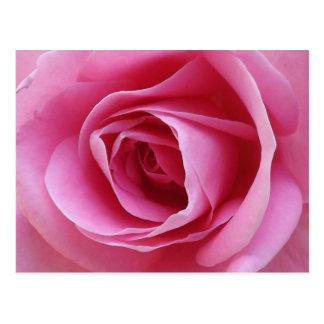 Everlasting Pink Postcard