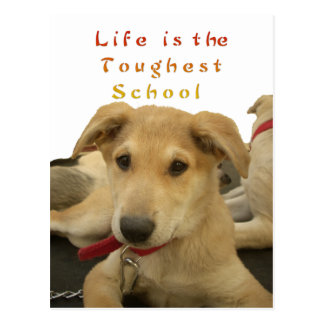 Every Dog Has iTS  DAY  Hakuna Matata Happy days a Postcard