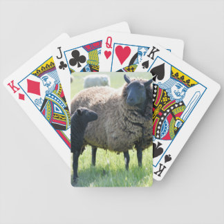 Every family has a black sheep bicycle playing cards