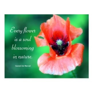 Every Flower Is A Soul...Poppy Photography & Quote Postcards