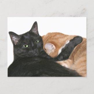 Everyone needs a hug postcard
