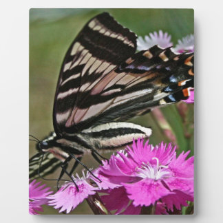Everything Butterfly Plaque