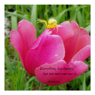 Everything Has Beauty Confucius Spider on Tulip Poster