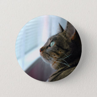 Evey the Kitty contemplates outside Button