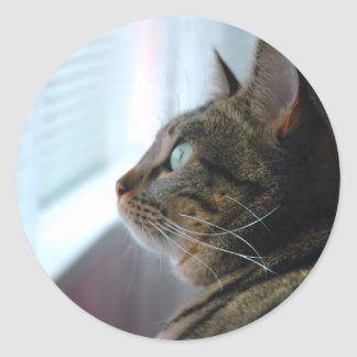 Evey the Kitty contemplates outside Classic Round Sticker