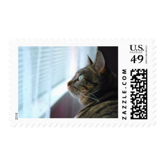 Evey the Kitty contemplates outside Postage