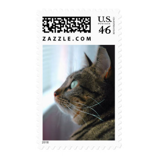 Evey the Kitty contemplates outside Postage Stamps