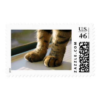 Evey's Paws Stamps