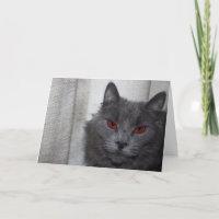 Evil cat card