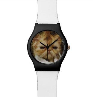 Evil cat watches
