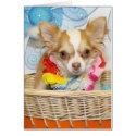 Evil - Long Hair Chihuahua -5 card