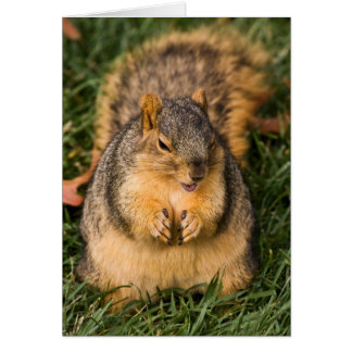 Evil Squirrel Greeting Cards