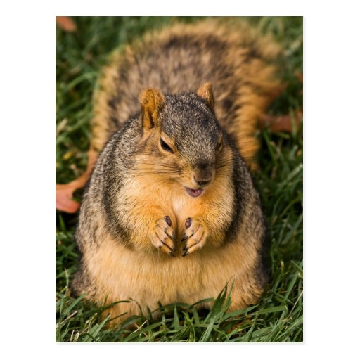 Evil Squirrel Postcard