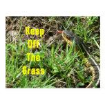 Evite la hierba postales