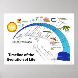 Evolución de la vida en diagrama de la cronología  poster