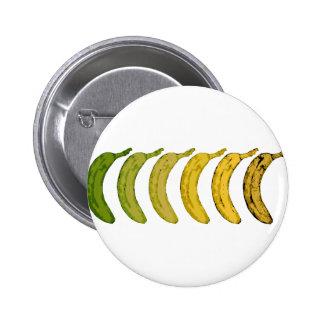 Evolución del plátano pin redondo 5 cm