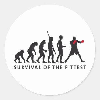 evolution boxing classic round sticker