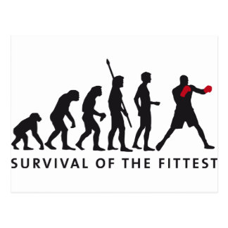 evolution boxing postales
