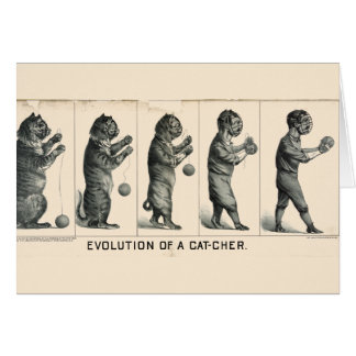 Evolution of a Cat-cher Cards