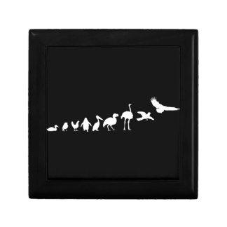 Evolution of birds trinket box