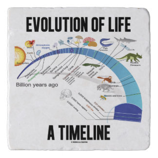 Evolution Of Life A Timeline Biology Trivet