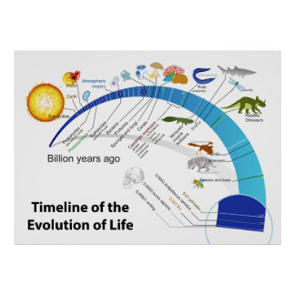 Evolution of Life on Earth Timeline Diagram Posters