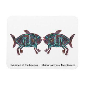 Evolution of the Species Rectangular Magnet