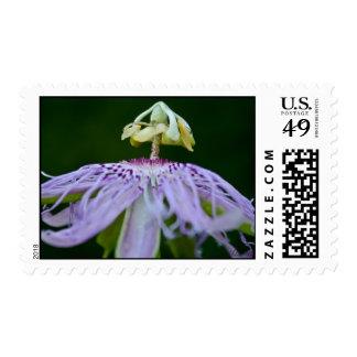 Evolve Stamps