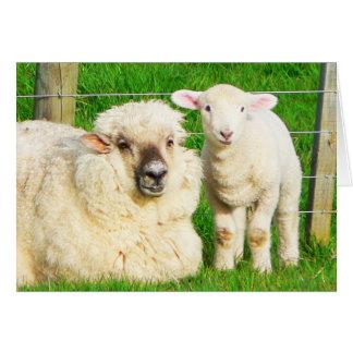 Ewe and Lamb Greeting Card