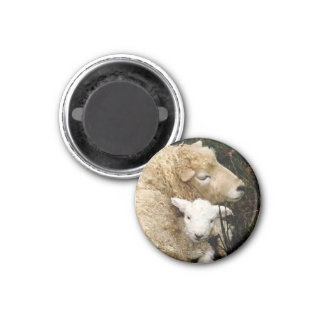 Ewe and Lamb Magnet