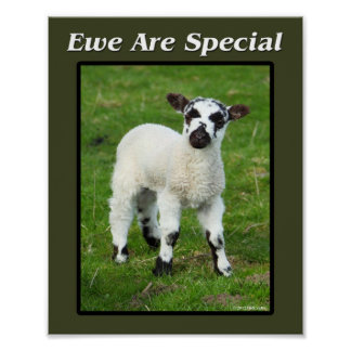 Ewe Are Special Poster