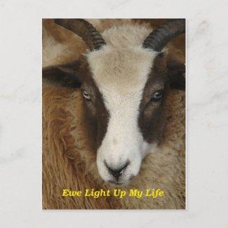 Ewe Light Up My Life postcard
