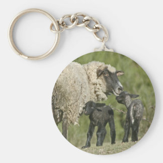 Ewe with her lambs basic round button keychain
