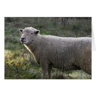 Ewe's so Sweet! Card