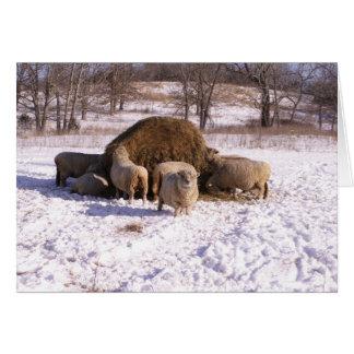 Ewe's Very Fluffy! Card