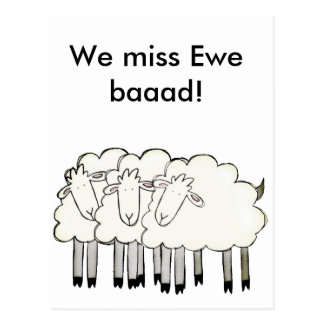 Ewe's with a message! postcard